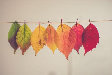 Il y a 7 feuilles d'arbres chacune d'une couleur différente, une verte, une jaune, une orange, une rouge