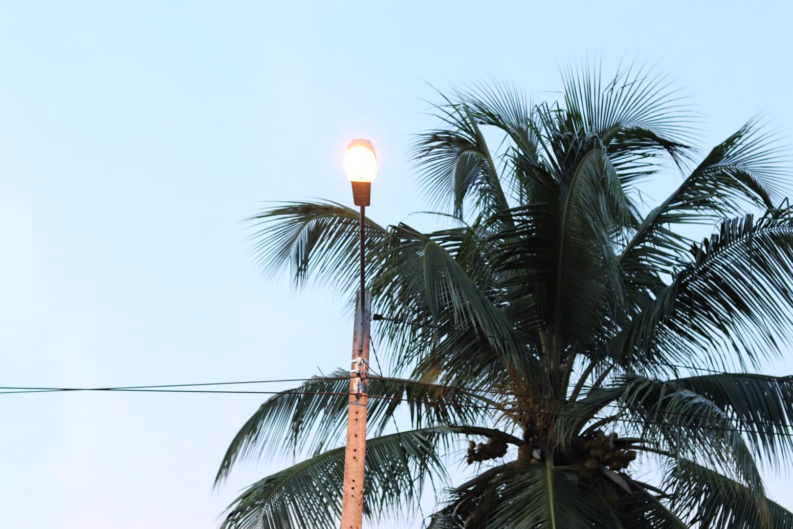 Photo de feuilles de palmiers illustrant l'agro-écologie en Afrique soutenue par onepoint